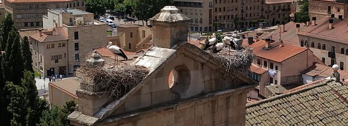 Tour Salamanca: Las cigüeñas han vuelto